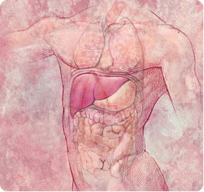 liver_health_liver_intro
